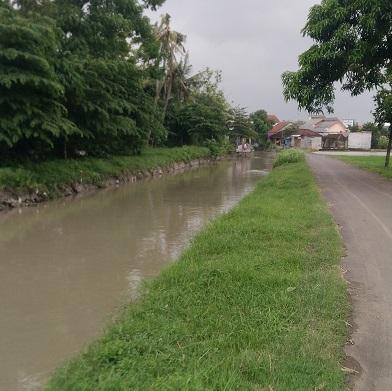 Rumput Samping Sungai