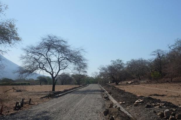 Jalan Bebatuan Menuju Savanna Bekol Taman Nasional Baluran