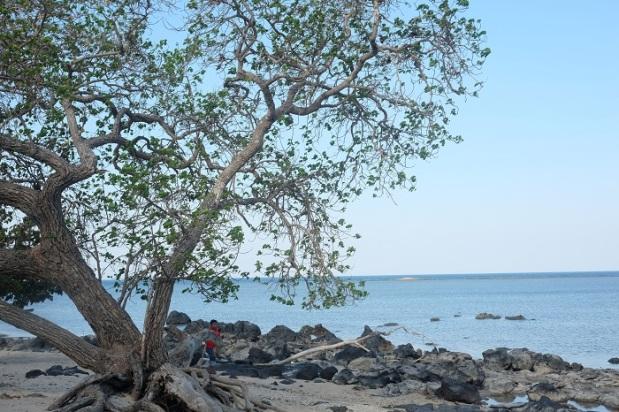 Pemandangan Pantai Bama Taman Nasional Baluran