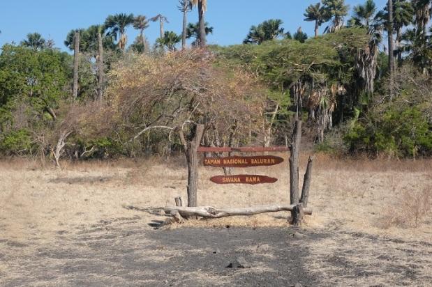 Savanna Bama Taman Nasional Baluran
