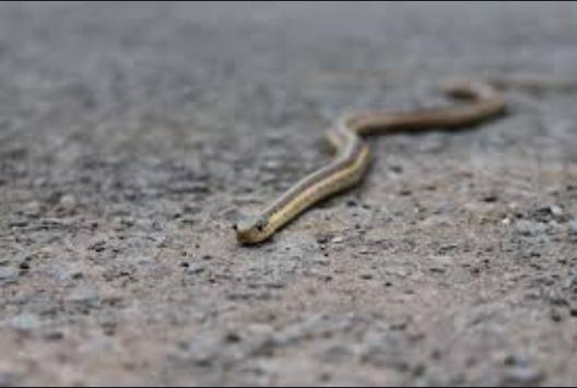 ular liar